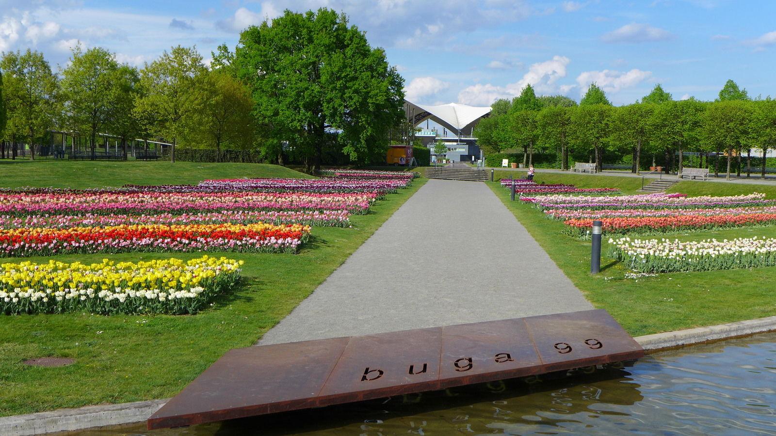 Tulpen im Elbauenpark (Foto: Felicitas Remmert)